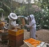 "Les ""Bee Api"" au travail !"