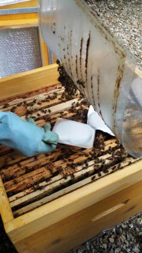 Traitement avant l'hiver contre  les parasites